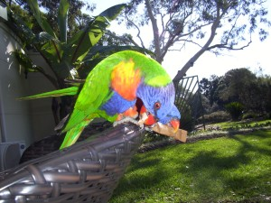 Parrots, eating my sugar.